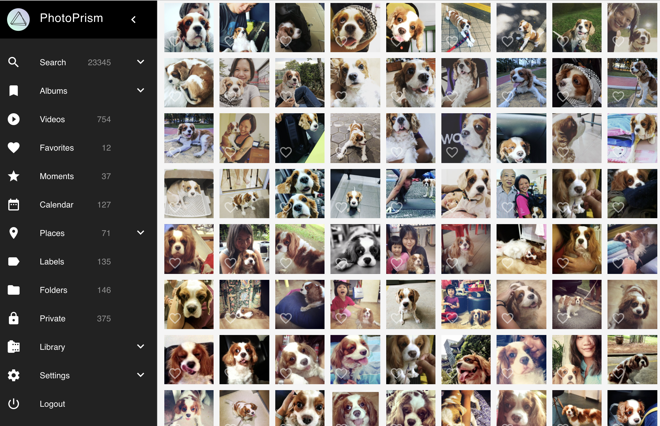 Screenshot of PhotoPrism showing lots of dogs in the pictures